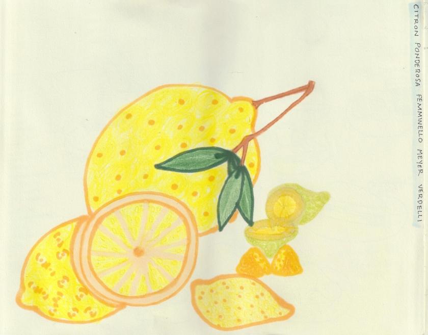 Lemons_Varietals final